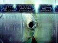 1381921664_proklyatye-igolki-merih-yango_1