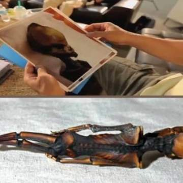 Обследовано тело предположительно инопланетянина из пустыни Атакама