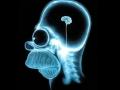1395771121_Naiydena-oblast-mozga-otvetstvennaya-za-prinyatie-resheniiy