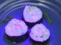 1396757702_v-amerikanskih-restoranah-podayut-sushi-kotorye-svetyatsya-v-temnote