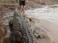 1397533508_thumb_nehvatka-adrenalina-kazhdyiy-den-tolkaet-ekskursovoda-v-past-k-alligatoram_12