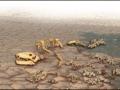 1401404042_Massovoe-vymiranie-vvodit-ekosistemu-v-stupor