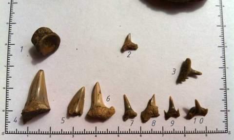Из камня на Марсе торчит зуб акулы или клинок ножа