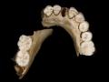 1401897782_thumb_neandertal-cy-vozmozhno-nachali-vymirat-bez-pomoshi-lyudeiy
