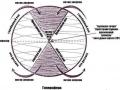 1405355222_thumb_drevnie-teorii-ciklov-vremeni-soglasno-fulkanelli-i-andaiyskomu-krestu_3