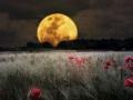 1405565102_thumb_taiyny-nebesnyh-sputnikov-zemli-i-marsa_1