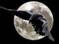 1410751081_gigantskie-pticy-v-nebe-yakutii