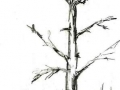 1410751081_thumb_gigantskie-pticy-v-nebe-yakutii_1